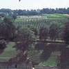 vineyards, grapes, hillside, landscape, trees,